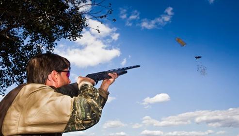 Montaraz Pigeon Shooting Report
