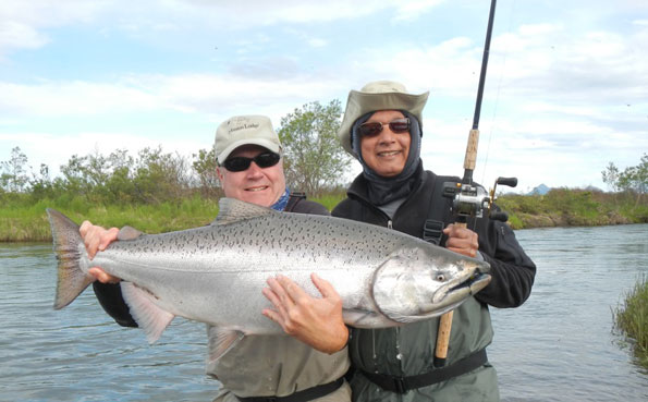 Chinook salmon do not come much silver than this alaska