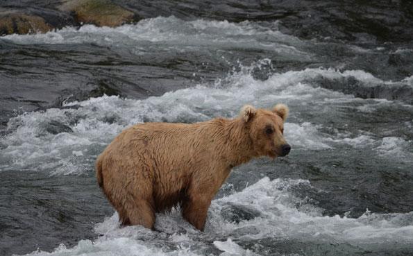 bears fishing mission lodge Alaska