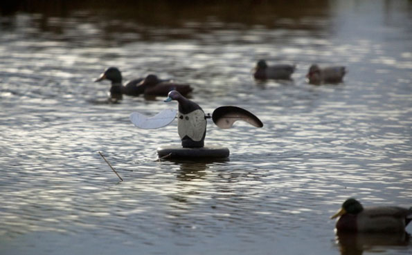 a spread of decoys Steady Hunting Throughout Los Crestones