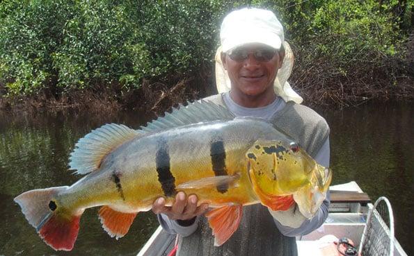 Amazing Peacock Bass Fishing