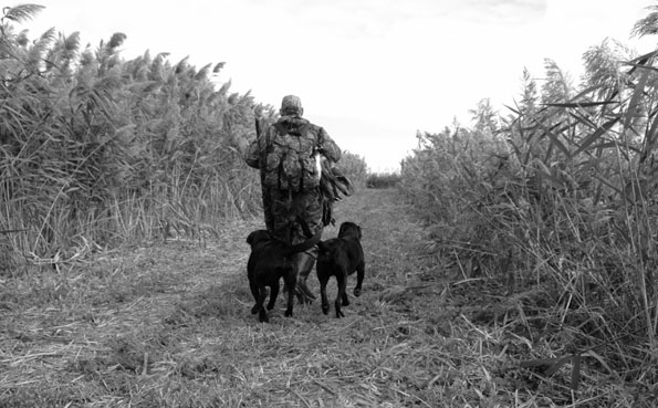 Shooting guide with his dogs Argentina shooting report