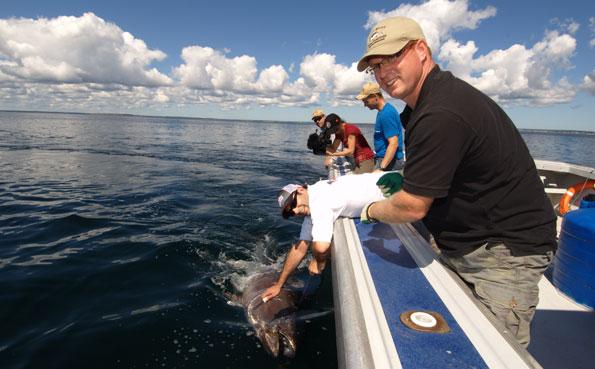 New Bluefin Tuna Destination Report of releasing a fish