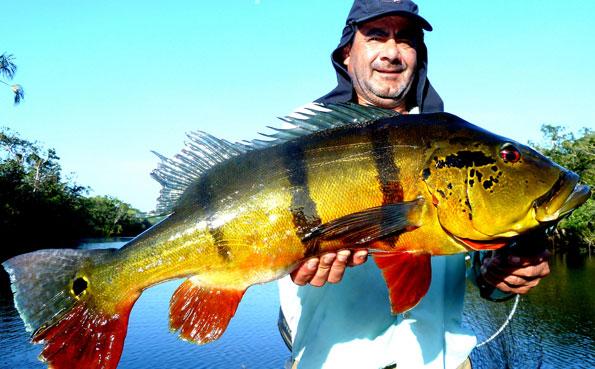 Peacock Bass Brazil