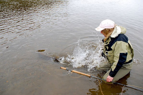 releasing a sea trout in argentina