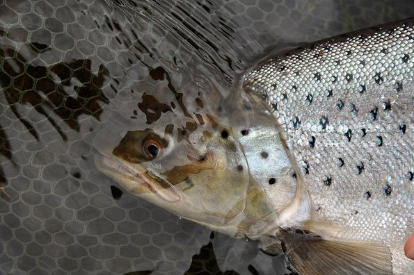 The best sea trout fly fishing holidays in Argentina with sportquest holidays