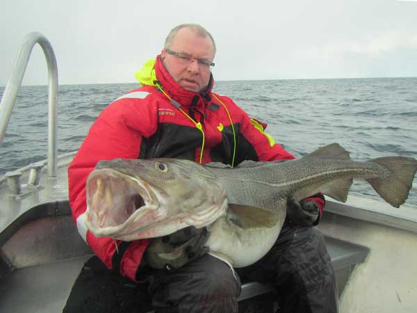 this cod is massive look at the rest of this Norway Fishing Report