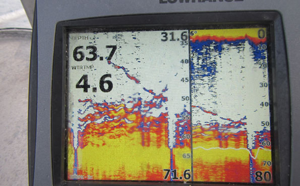 The fish finder full of Skrei Cod Norway Fishing Report