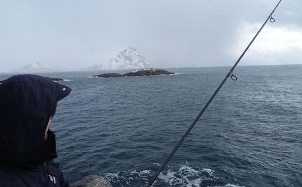 Some shore fishing in Soroya Norway Fishing Report