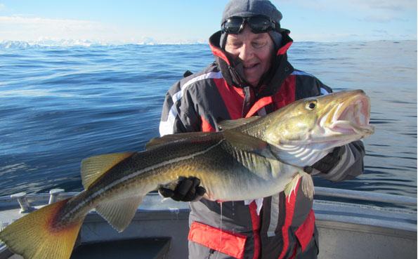 A monster Skrei Norway Soroya Fishing Report Norway
