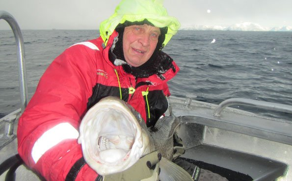The cods mouth is so very large Fishing Report Norway
