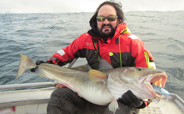 Norway fishing report live from Soroya with massive Skrei cod