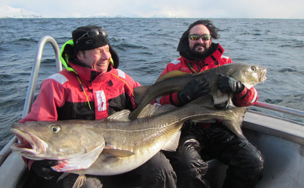 The sea around Soroya Norway fishing report are full of huge cod
