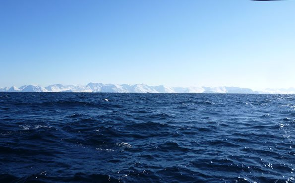 The sea was rough this day Norway fishing report