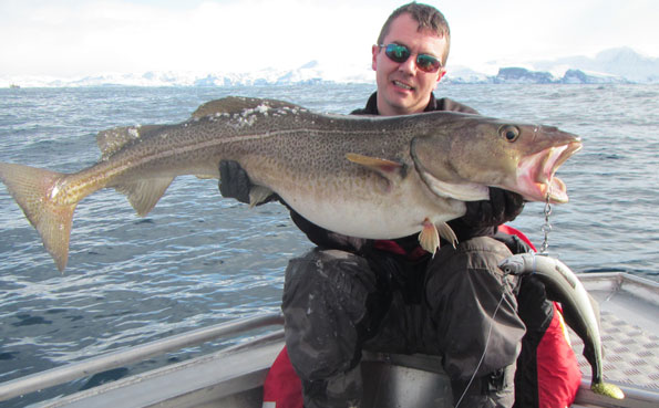 Check out the lure we catch them on Norway fishing report