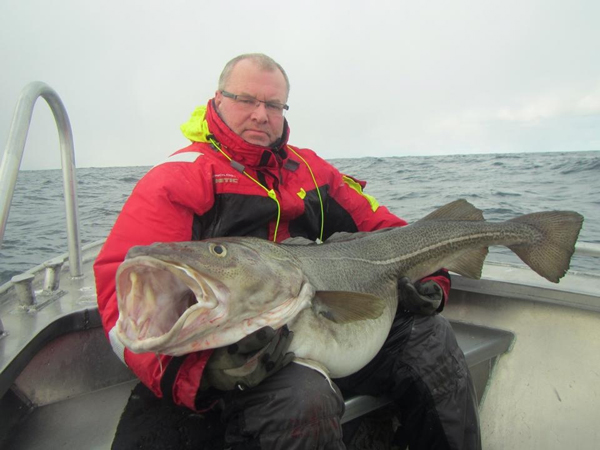 What a monster Skrei Cod from Soroya Norway Fishing Report