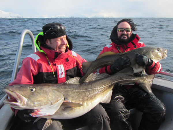 Two friends holding up massive Cod in Soroya Fishing Report Norway