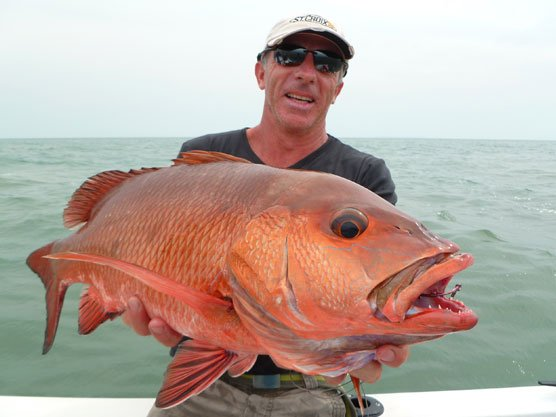 Bright red snapper New Destination Guinea Bissau Report