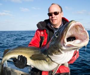 Massive Norwegian Cod Norway fishing report Lofoten