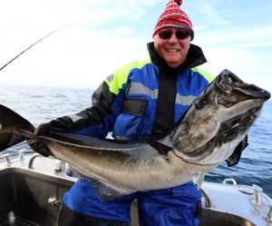 Black as your hat Coalfish Norway fishing report
