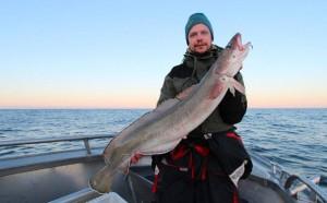 Huge ling caught in Norway Fishing Report Norway