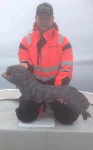 Wolfish from Norway Fishing Report Norway