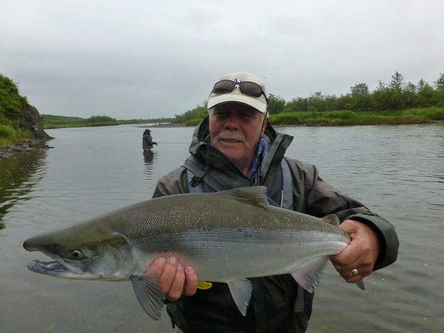 a nice fresh salmon fly fishing for salmon in alaska