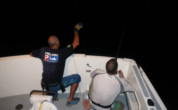 Trying to land the huge Marlin in the dark Big Game Fishing Report