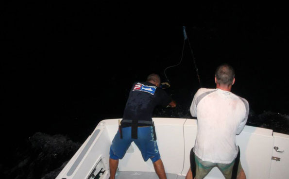 They nearly got the Marlin in Big Game Fishing Report