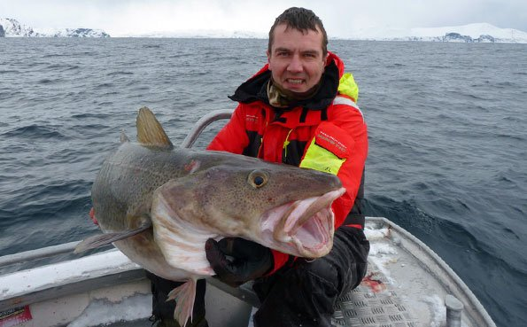 a real mans 70LB Cod Norway fishing report
