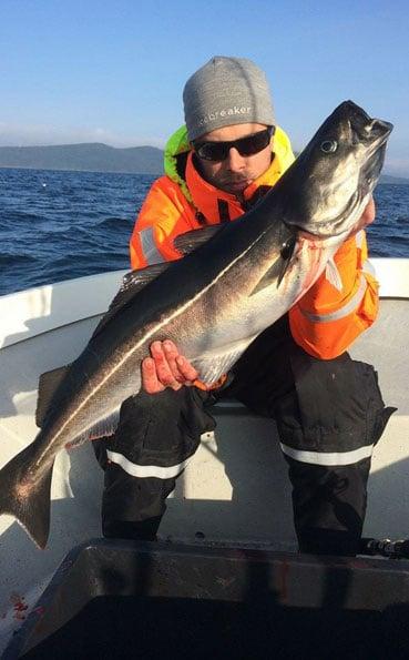 Man holding a classic sized coalfish fishing report norway