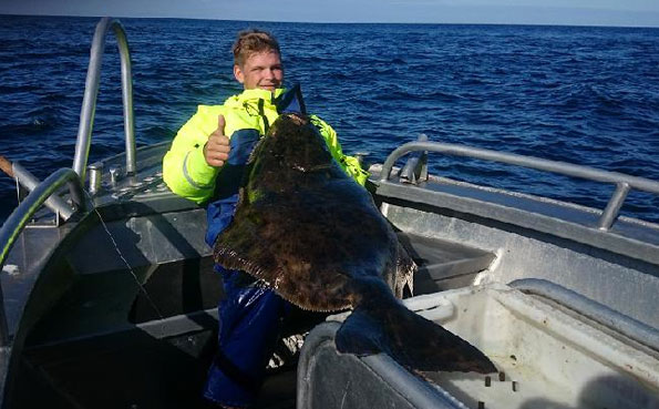 Thumbs up for this big Halibut Norway Fishing Report