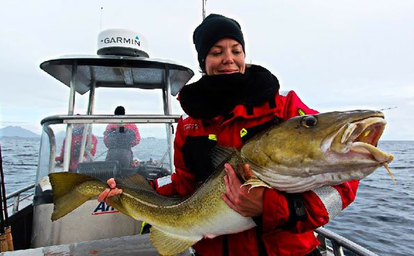 Lady catches a big Cod Norway Fishing Report Lofoten