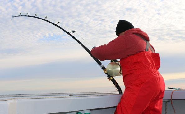 Bluefin Tuna Fishing Report of a guy playing a 1000LB Tuna