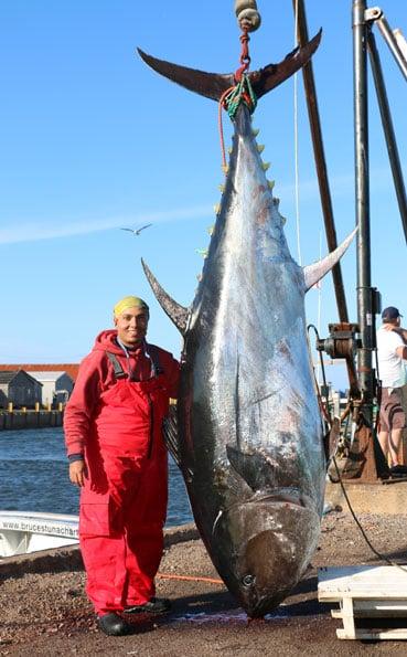 Huge Tuna Caught Bluefin Tuna Fishing Report