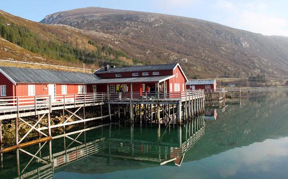 Stunning camp in Lofoten islands Fishing Report Norway
