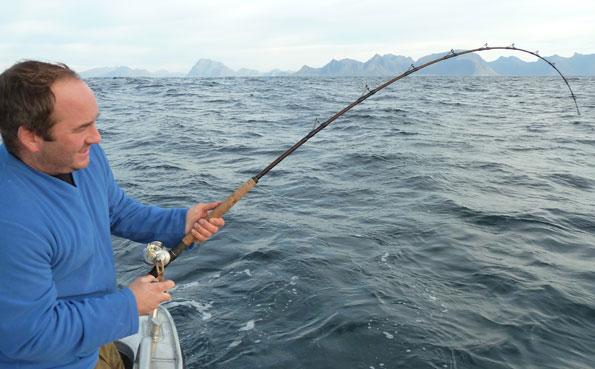Ben is bent in to Halibut fishing report Norway