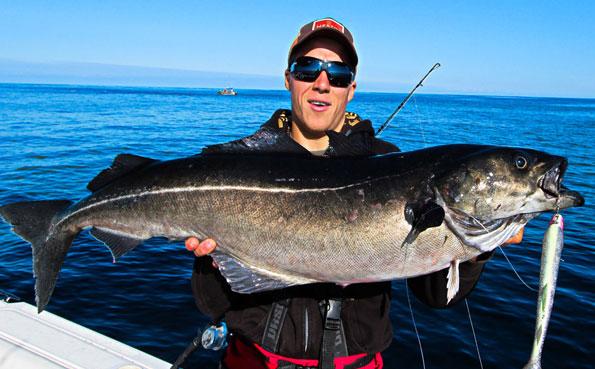 Huge Coalfish from the Lofoten Islands Norway fishing report