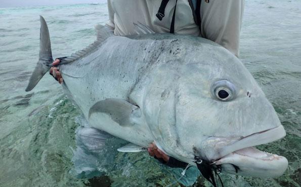 Farquhar Fishing Report 5th - 12th November