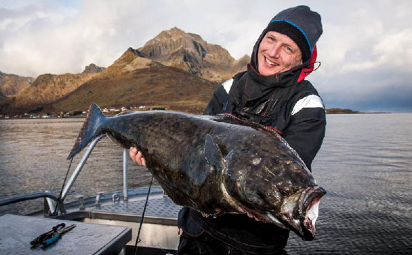 Man holding a lovely Halibut for this Norway fishing report
