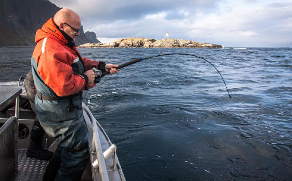 Man playing a huge Halibut Norway fishing report