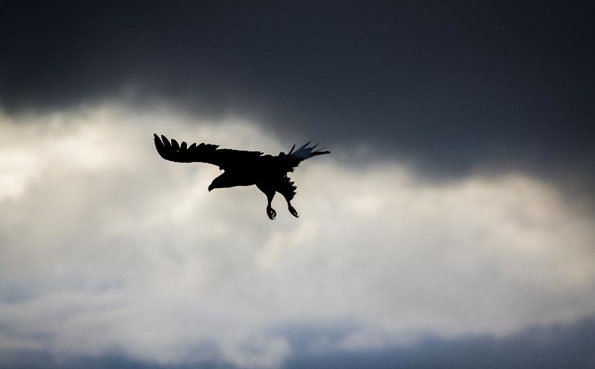 A sea eagle in Norway fishing report