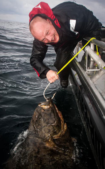 Tagged and released Halibut Norway fishing report