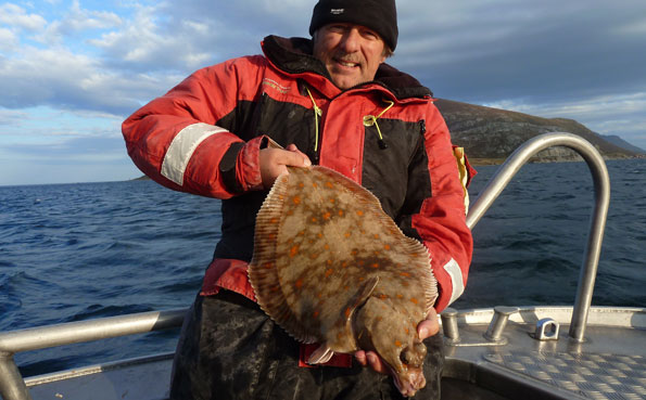 A very big Plaice fishing report norway from the Lofoten Islands