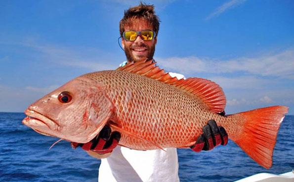 Huge Snapper Sri Lanka Fishing Report