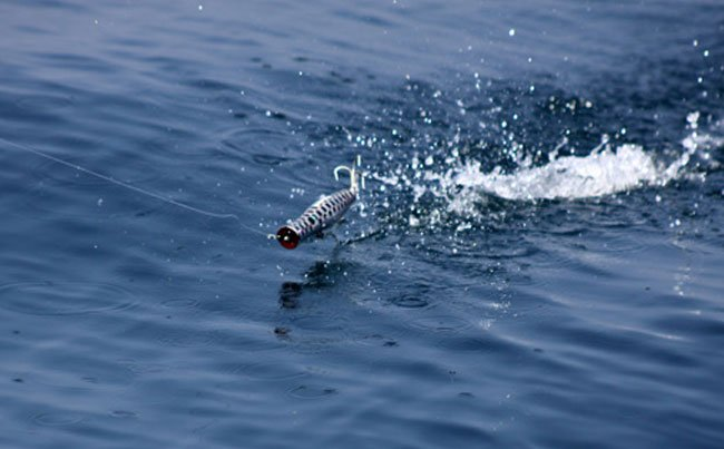 A popper skipping across the surface Andaman Fishing Report