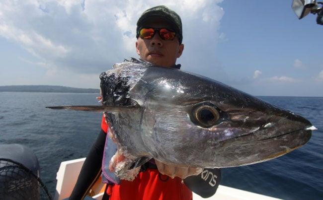 Something bit this tuna in half Andaman Fishing Report