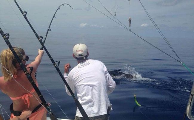 Hard fighting Sailfish everywhere Costa Rica Fishing Report