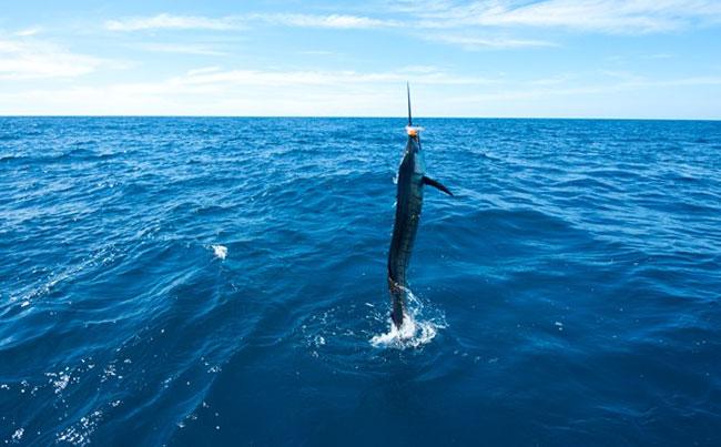 Guatemala Fishing Report