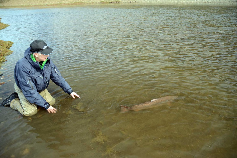 the big 30lb plus sea trout swimming away in argentina Las Buitreras Report